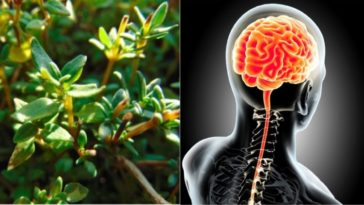 plants for brain health