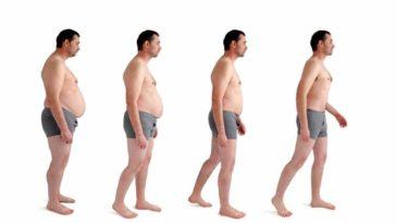 diet evolution