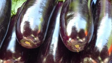 Aubergine cooking technique