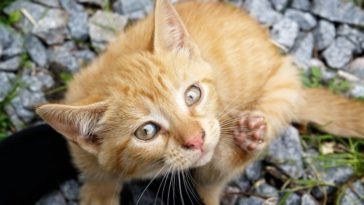 Lice: 5 ways to help your cat naturally get rid of them
